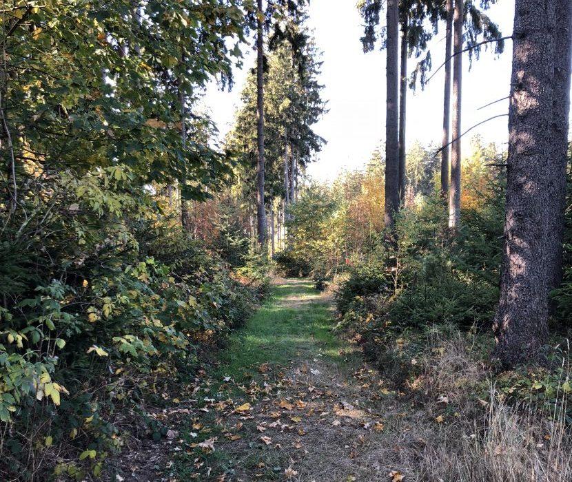Bäume auf Friedhof im Wald bei Hof