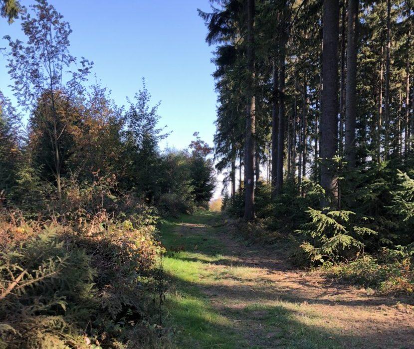 Baumbestattungen im Frankenwald bei Hof