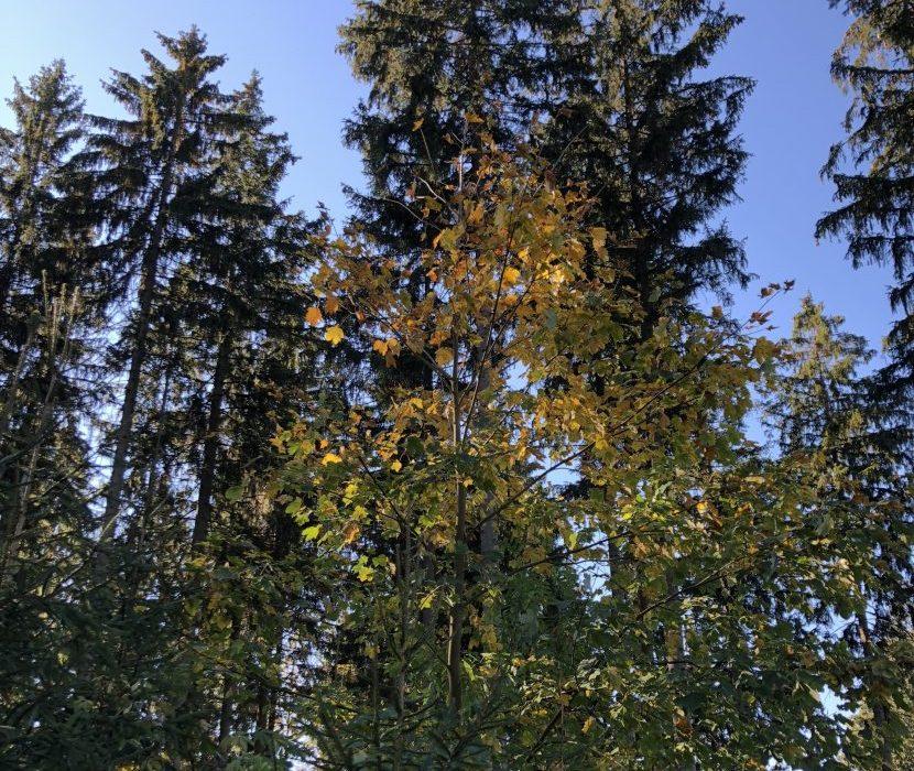 Baumfriedhof im Frankenwald Issigau