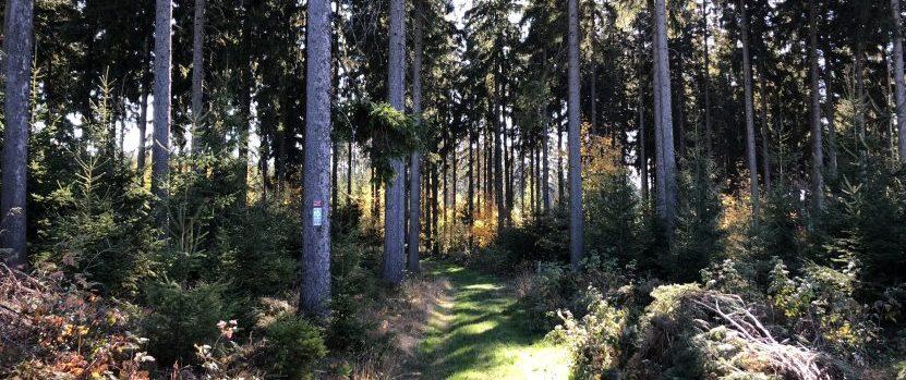 Baumgräber im Begräbniswald in Issigau bei Hof
