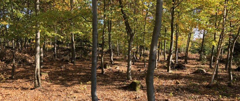 Bestattungswald in Issigau bei Hof