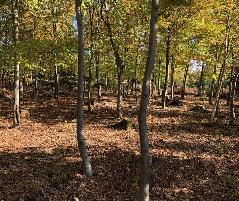 Bäume im Bestattungswald in Issigau bei Hof