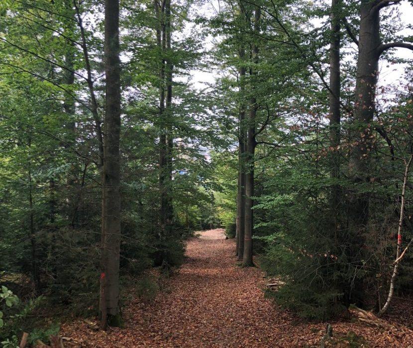 Blick in den Wald- und Naturfriedhof in Naila