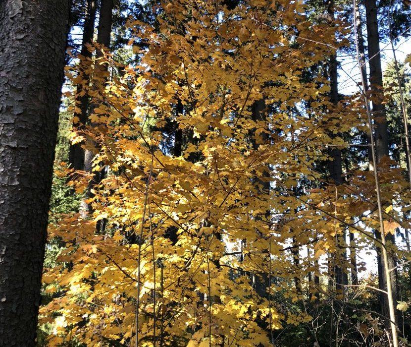Herbst im Naturfriedhof in Issigau