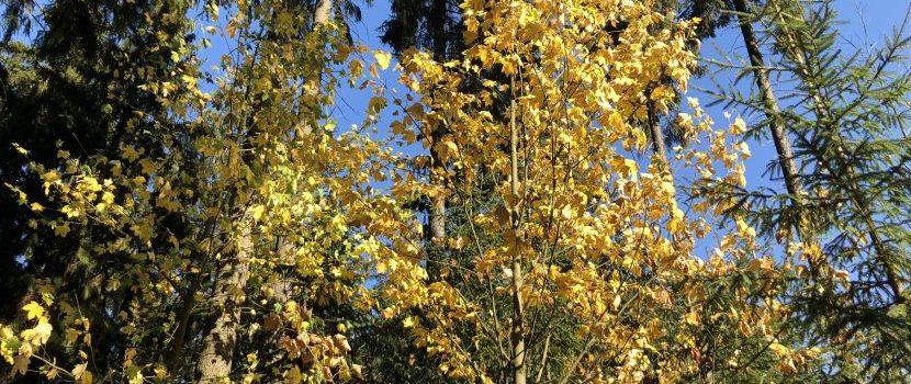 Herbstliche Bäume auf dem Waldfriedhof in Issigau