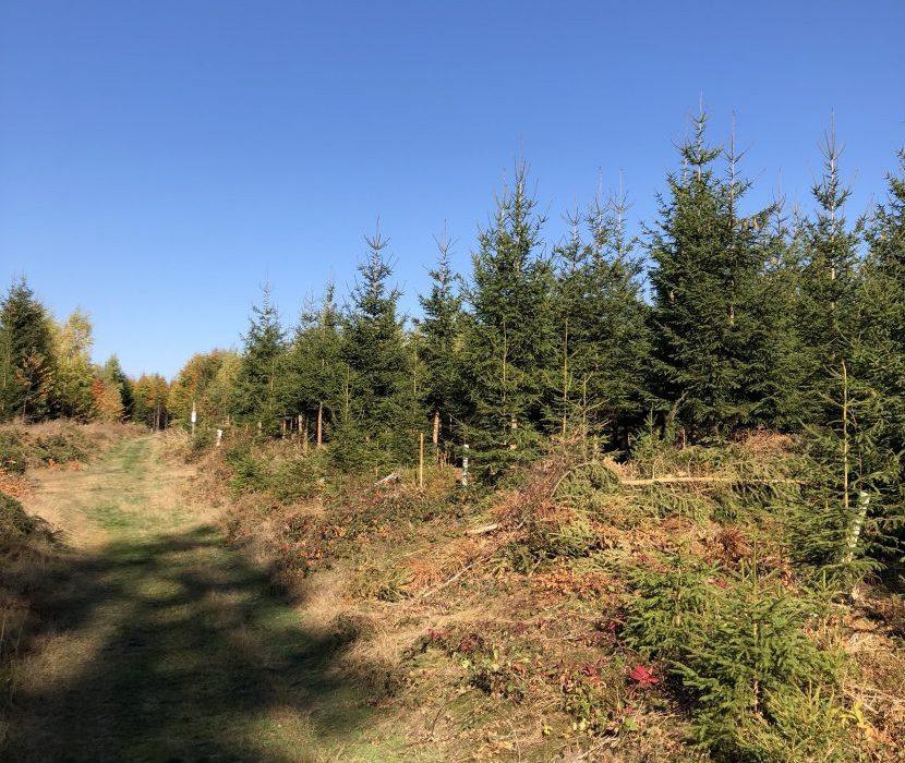 Interkommunaler Waldfriedhof im Frankenwald - Standort Issigau