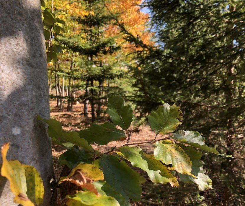 Naturfriedhof Issigau - herbstlich gefärbte Blätter