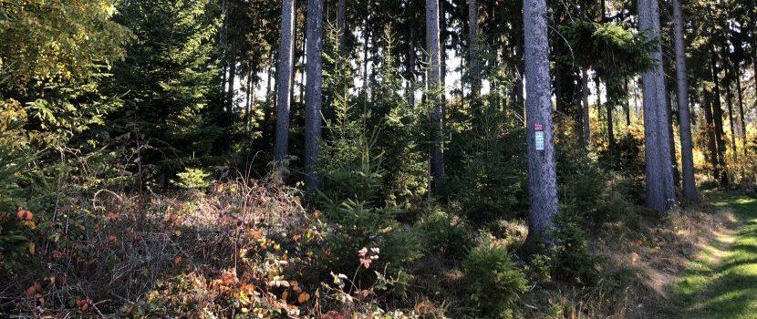 Urnengräber an Bäumen im Wald in Issigau