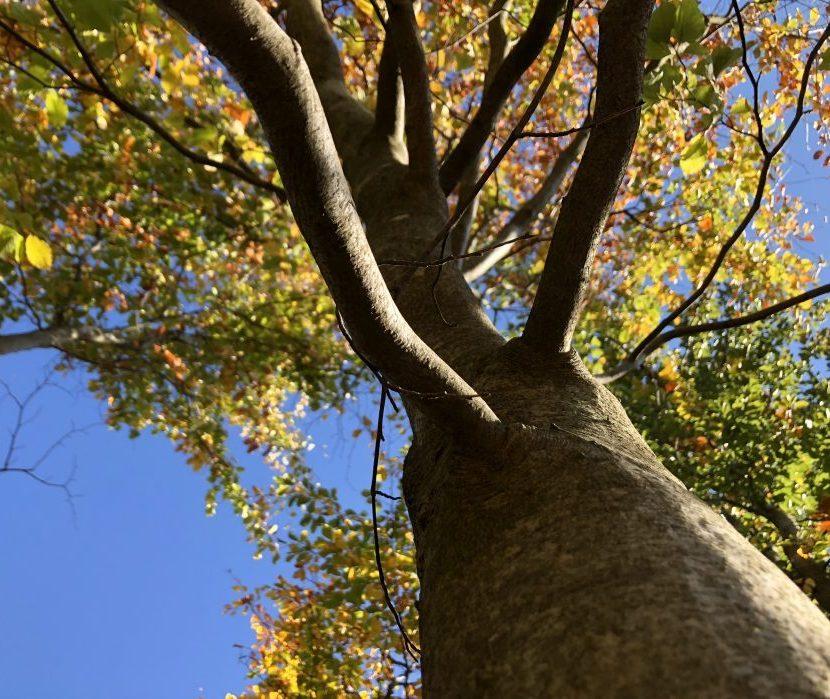 Wald- und Naturfriedhof Frankenwald - Blick in die Baumwipfel