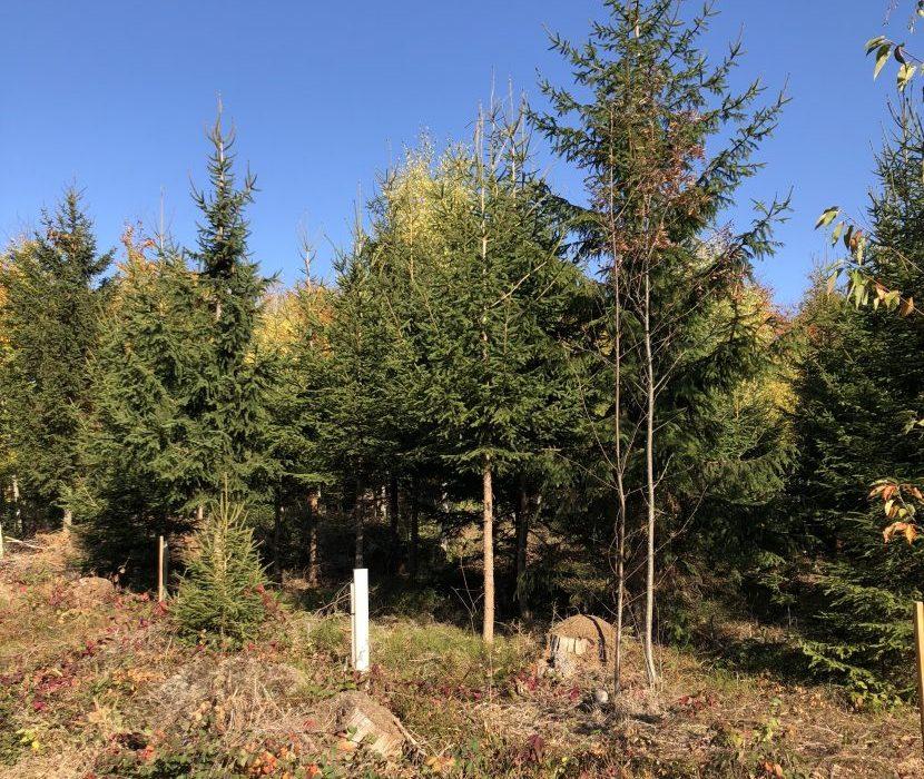 Waldbestattung auf Friedhof im Frankenwald