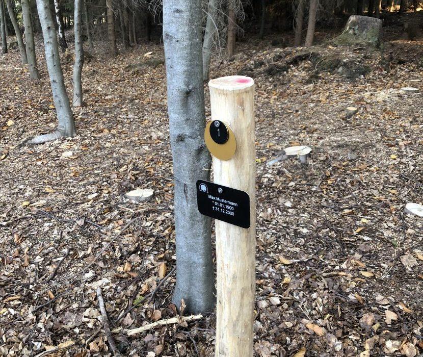 Waldbestattung in Issigau - Baumgrab mit Namenstafel