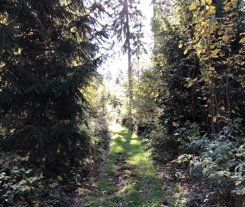 Waldfriedhof in Issigau und Naila
