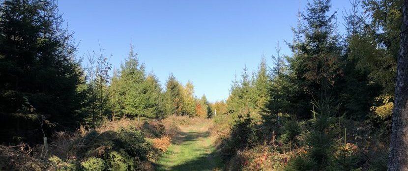 Zugang zum Baumbegräbnis im Frankenwald in Issigau